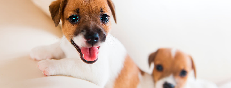 Mitä tarvikkeita koiralle kannattaa hankkia?
