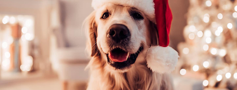 Joululahja koiralle