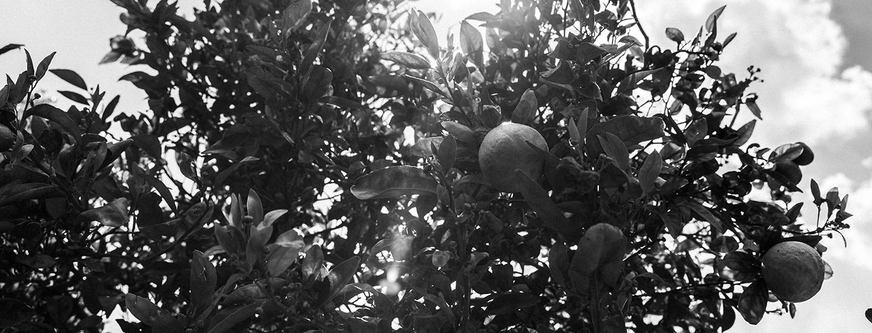 Pirkka Parhaat smoothieiden jäljillä Murcian hedelmätarhoilla