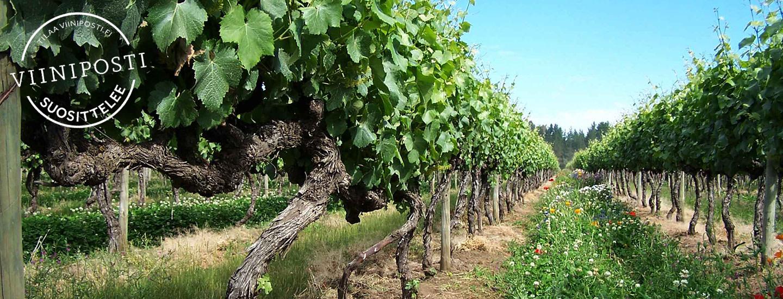 Viinien ekologisuus – luomu, biodynaamisuus, alkuviinit ja muut sertifikaatit