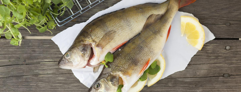 Näin onnistut: Kalan perkaaminen