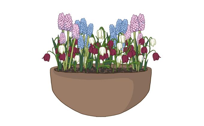 Kukkasipulien istutus