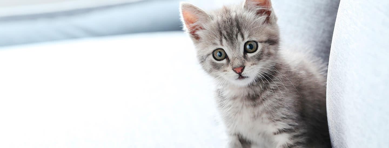 Mitä tarvikkeita kissalle kannattaa hankkia?