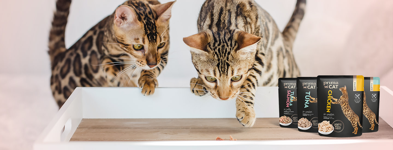 3 askeleella hyvinvoivempi kissa - näin totutat kissasi uuteen ruokaan