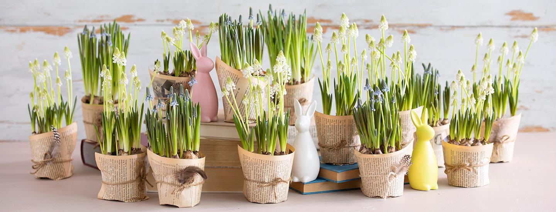 Helmililja - ideat kukkasomisteisiin ja pääsiäispöytään