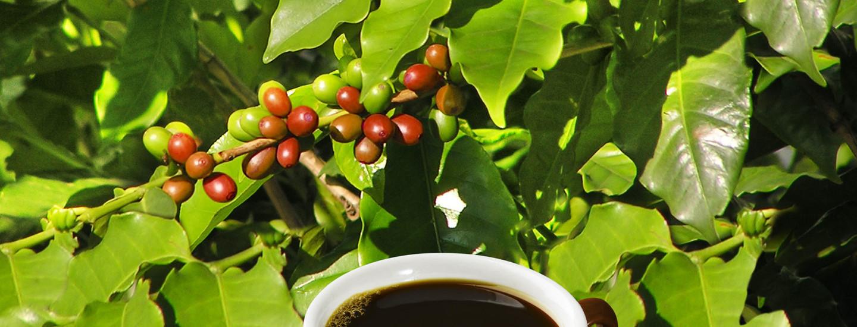 Paranna maailmaa kahvitauolla