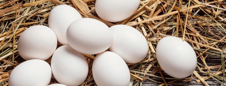 Näillä et munaa - parhaat reseptit kananmunasta