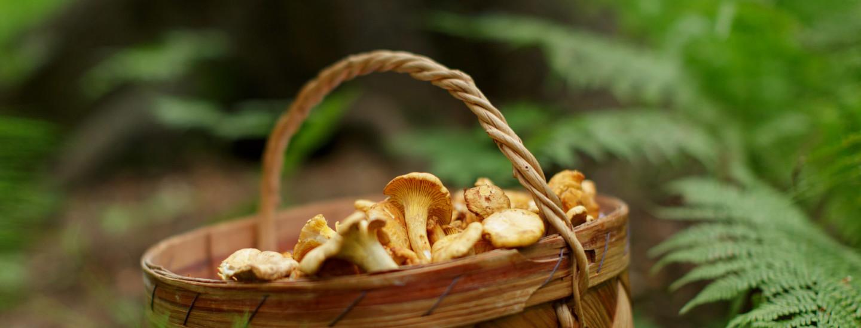 Sienet syysmetsästä