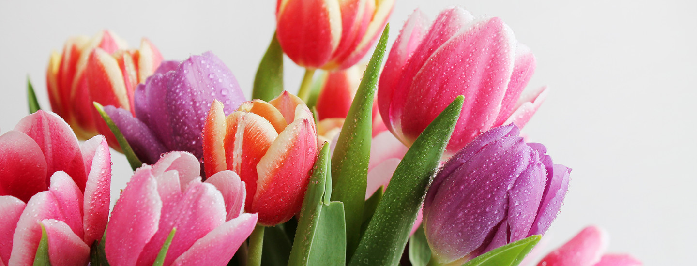 Kukat ystävälle ja rakkaalle - tulppaani on varma valinta helmikuussa