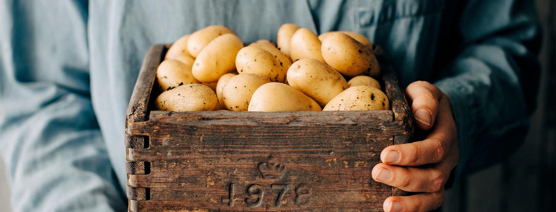 Uudet perunat – reseptit ja valmistusvinkit