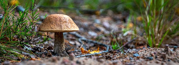 Sienten Pakastaminen
