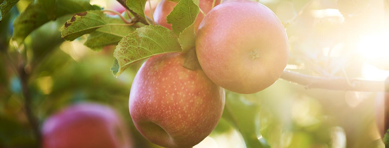 Pink Lady -omena