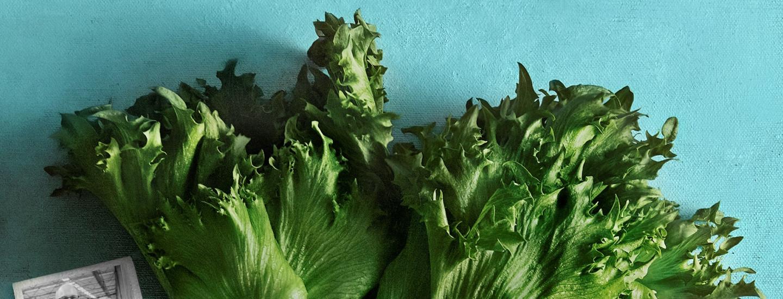 Salaattia humisevien honkamaisemien keskeltä