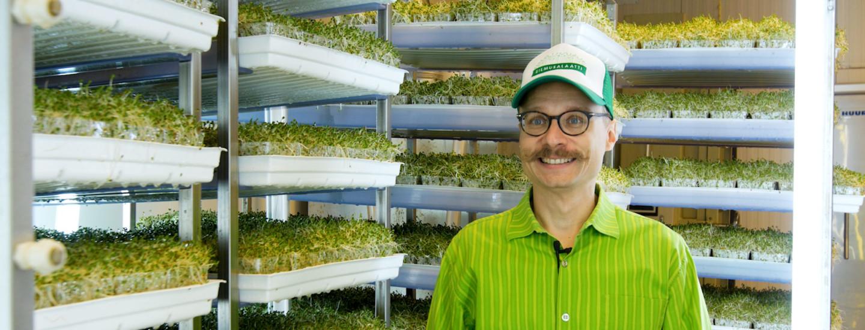 Silmusalaatti on energiatehokkaasti viljeltyä pääkaupunkiseudun lähiruokaa