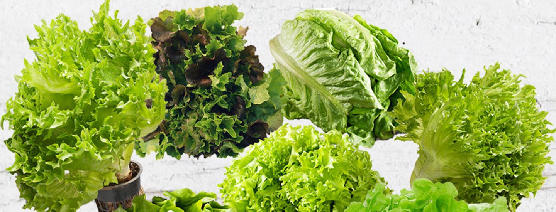Pirkka salaatit esittelyssä