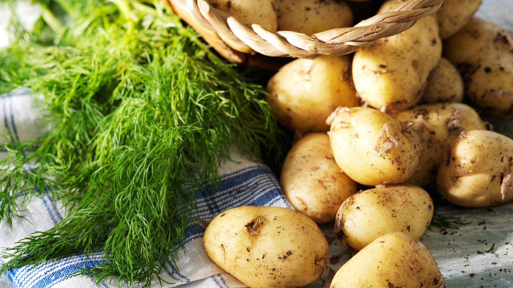 Uudet perunat | Varhaisperunat | Parhaat reseptit ja valmistusvinkit – K-Ruoka
