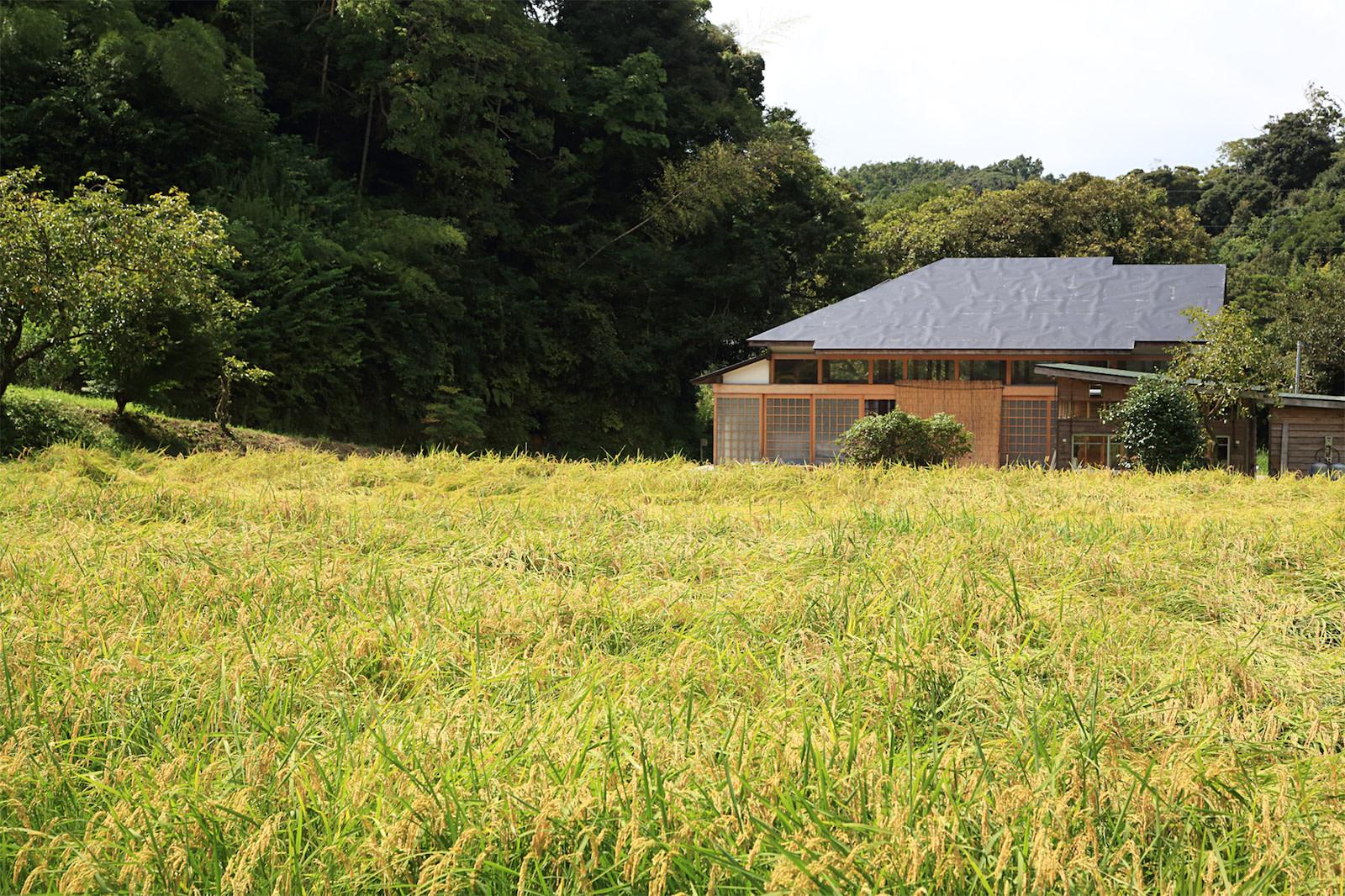 稲刈り02 | Workations(ワーケーションズ)