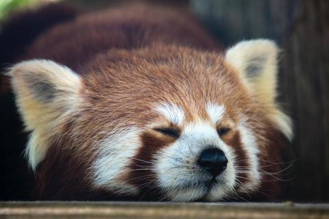 2020-08-14 - Come riprendersi dopo una notte in bianco passata a lavorare - panda