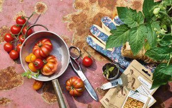 Tomaten: fruchtige Fitmacher