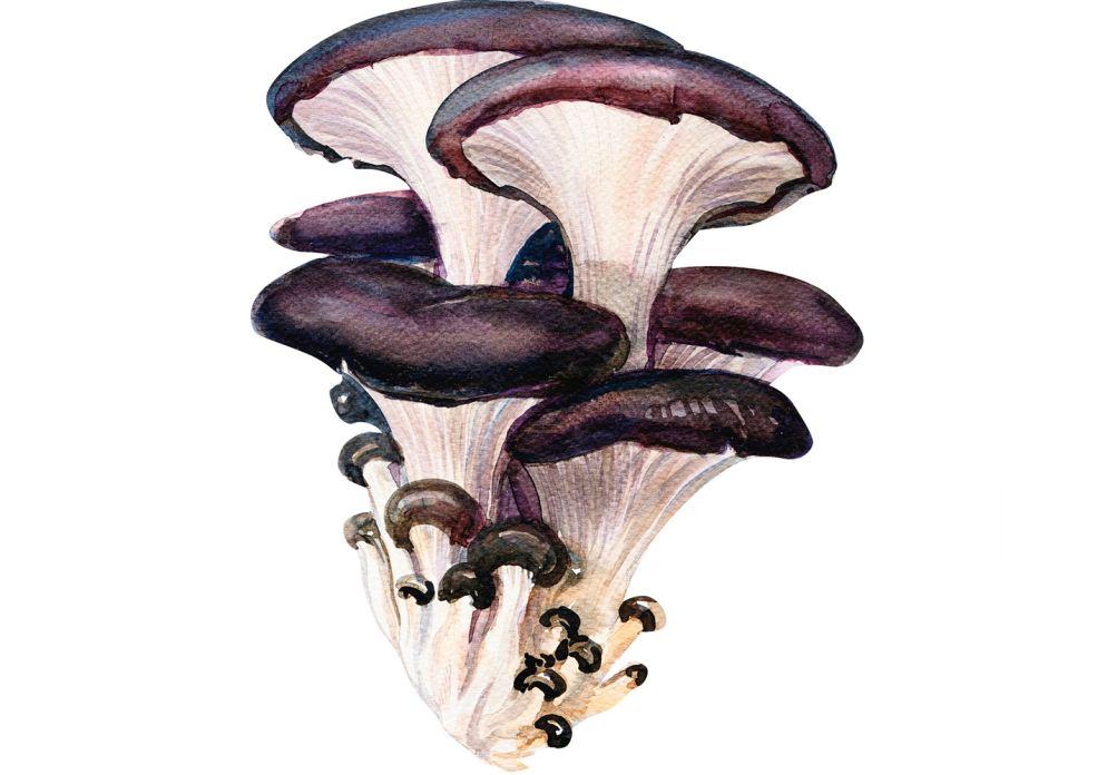 [AUSTERNSEITLING](https://www.wildeisen.ch/zutaten/austernpilze): Auch Kalbfleischpilz oder Pleurotus genannt, ist er bei uns nur als Zuchtpilz erhältlich. Bei jungen Pilzen sind die Stiele etwas zäh, deshalb sollte man diese vor Verwendung entfernen