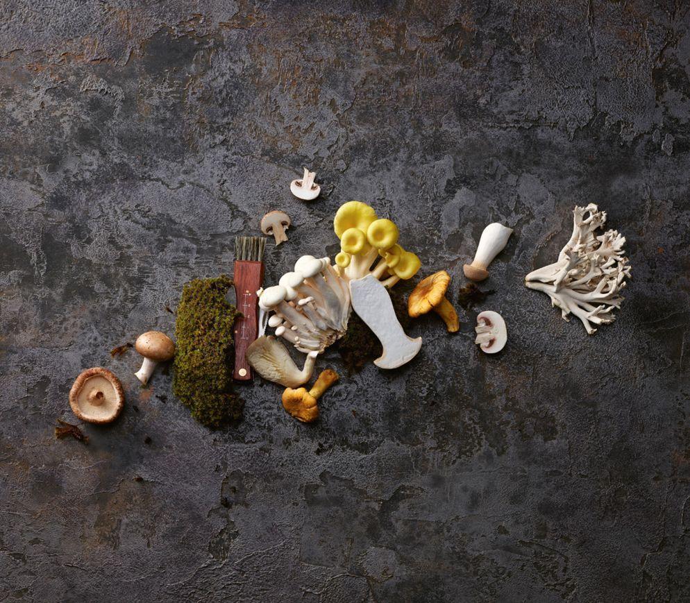 Pilze sind Naturtalente