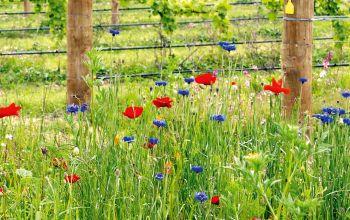 Biodiversität im Weinbau