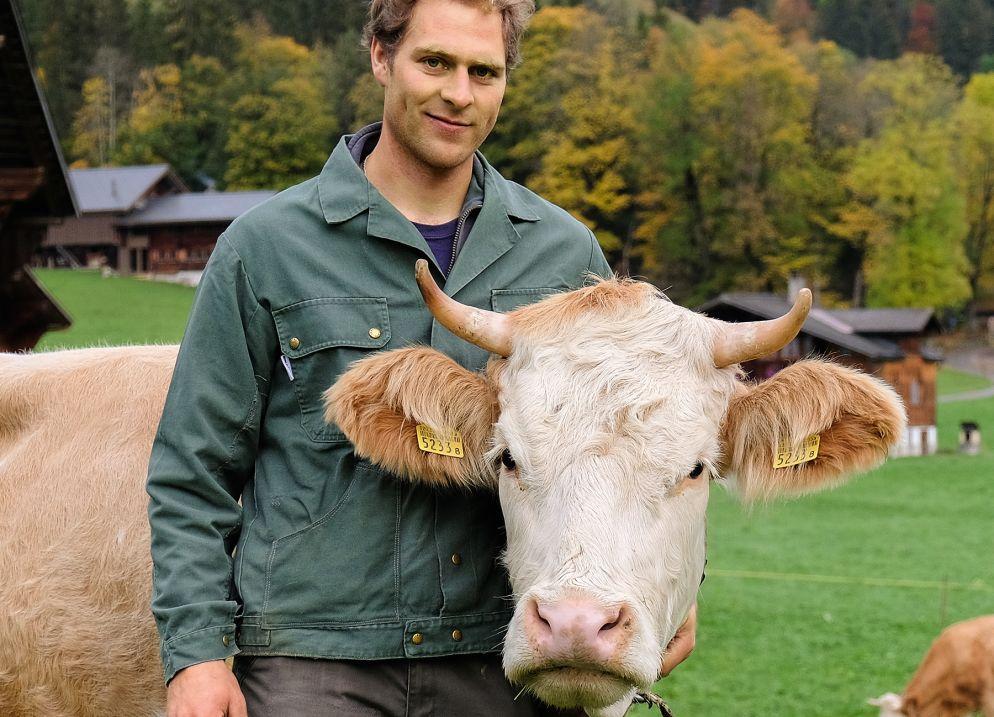 Natürlich Käse - Käse von Kühen mit Horn