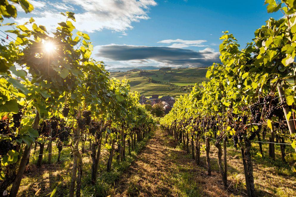 Schaffhausen: Im Land des Pinot noir
