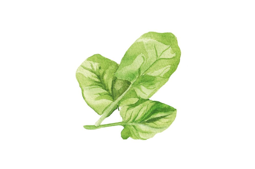 SPINAT: im Frühling gibt es den besonders milden Blattspinat, der auch roh als Salat gegessen werden kann. Irrtümlich wurde sein Eisengehalt lange überschätzt, dennoch enthält er reichlich davon, sowie Vitamin A, C, Kalium, Kalzium und Magnesium.