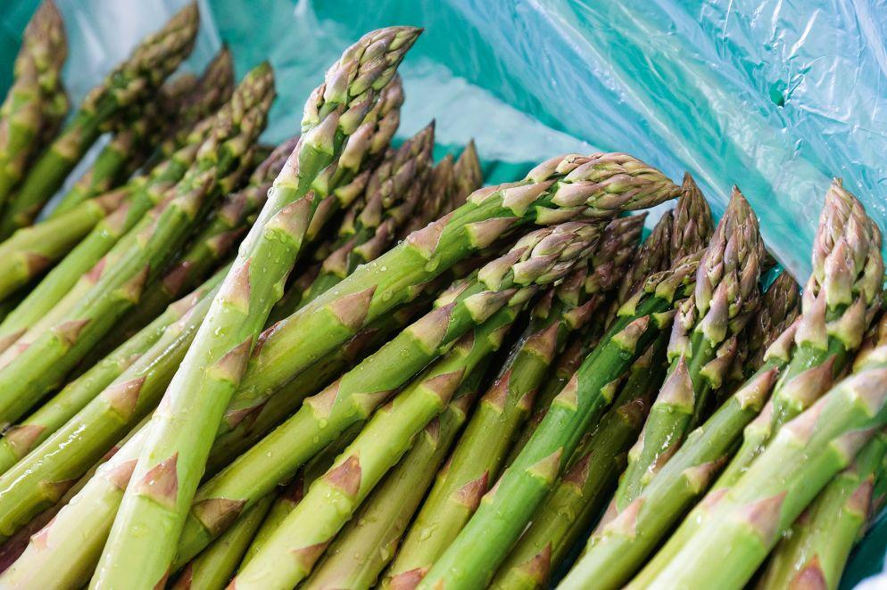 Frisch geerntete grüne Spargeln: Beim Stechen sind sie bis zu 40 cm lang und werden noch gekürzt.