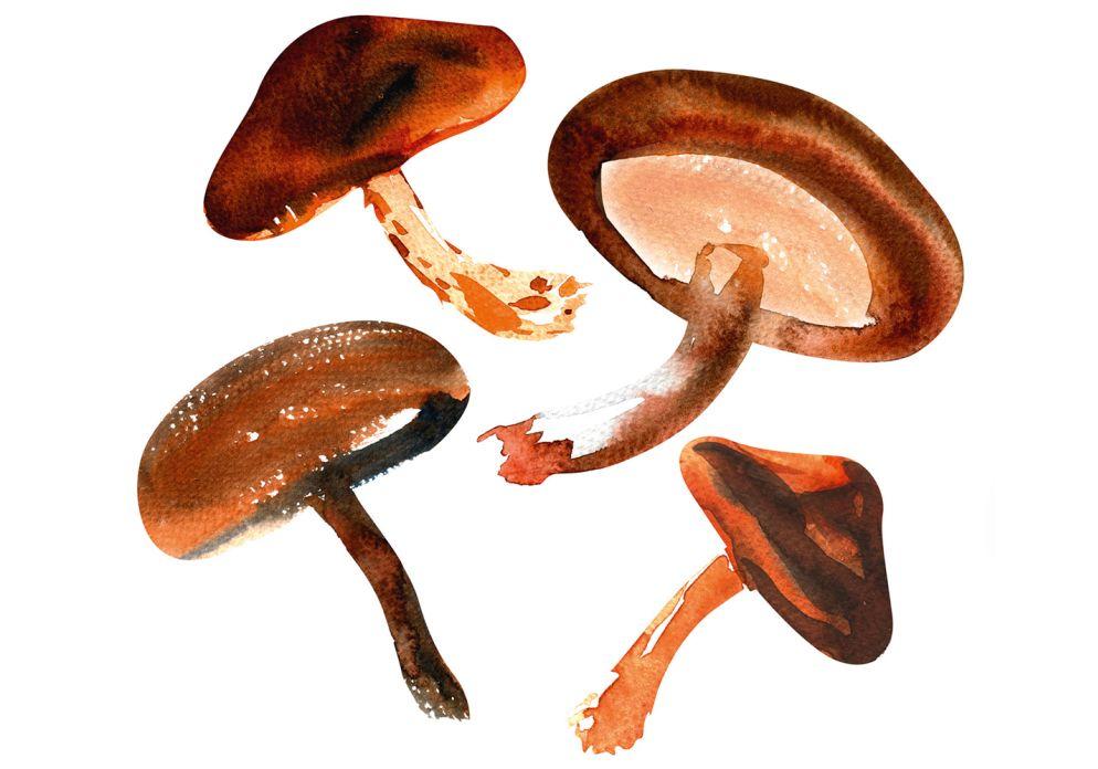 [SHIITAKE](https://www.wildeisen.ch/zutaten/shiitakepilze) hat ein leicht rauchiges, lauchartiges Aroma und passt gut zu asiatischen Speisen. Verwendet werden nur die Hüte, der Stiel ist zäh und sollte entfernt werden.