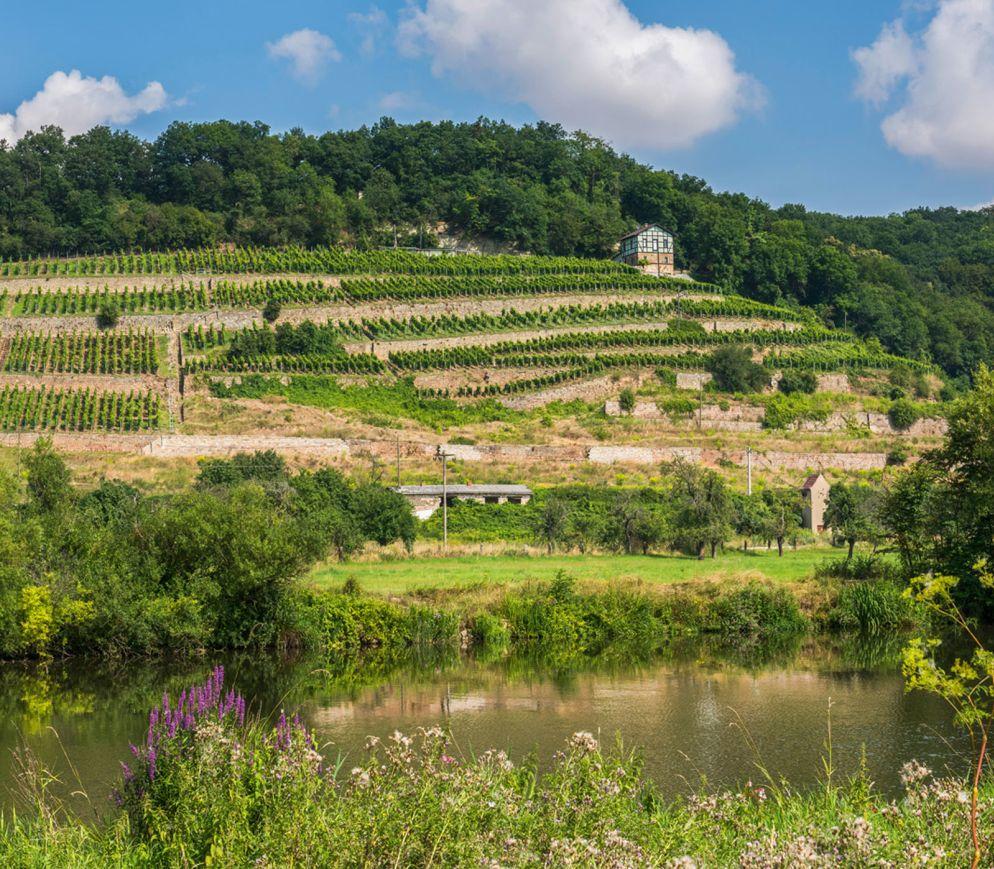 Wandel im Weingebiet Thüringen