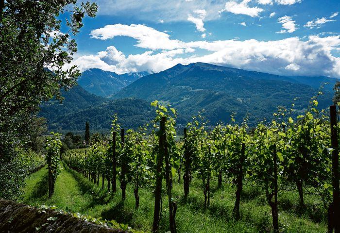 Graubünden: Das gelobte Land für Weinliebhaber und Gourmets