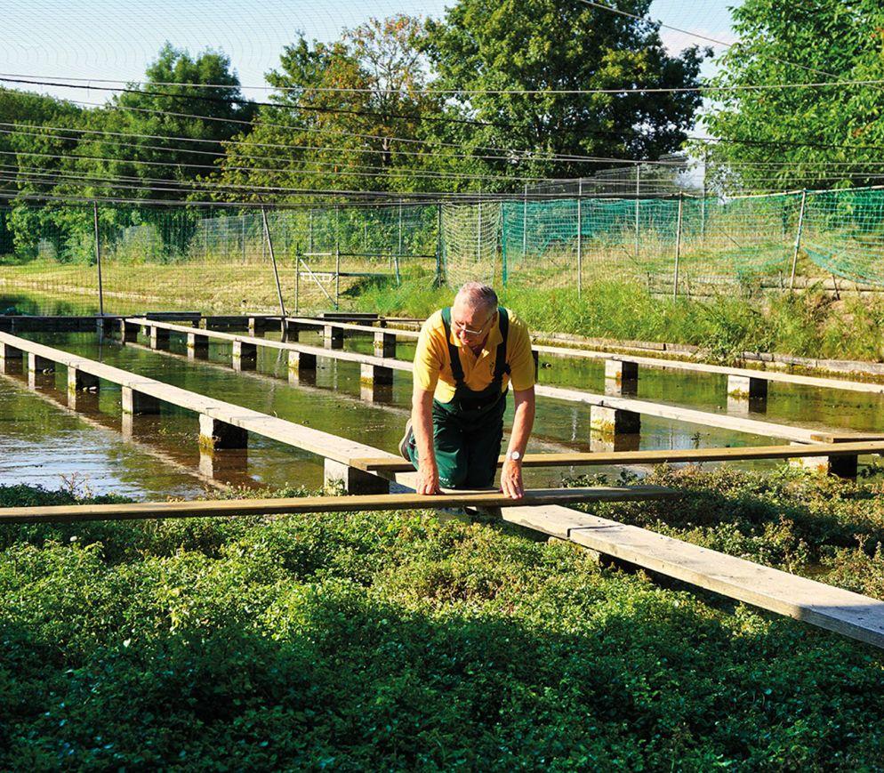 Ralf Fischer hat den Anbau von Brunnenkresse in Erfurt vor dem Aussterben bewahrt.
