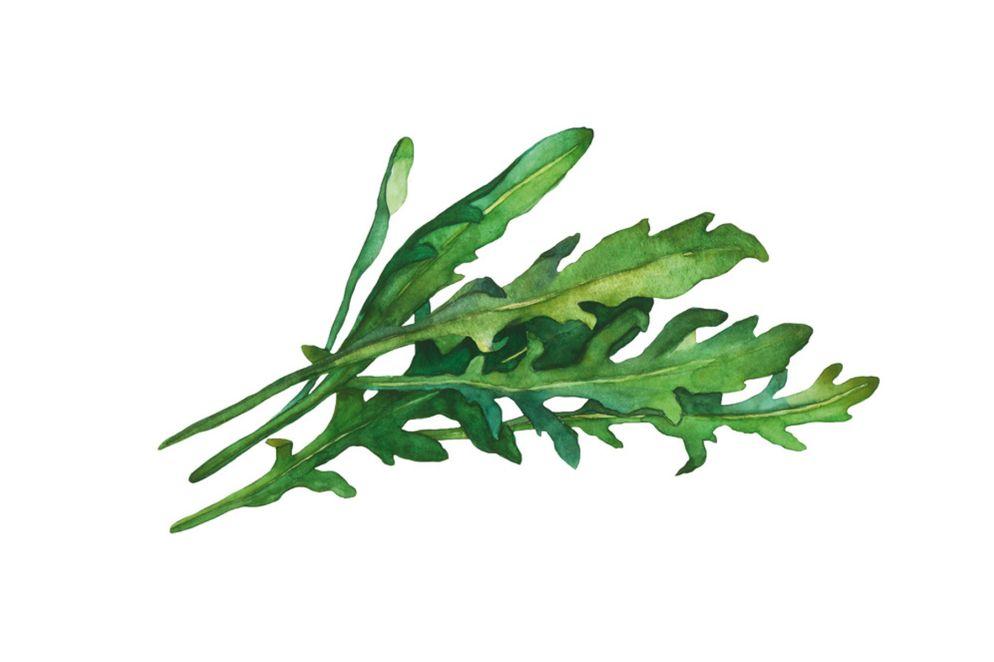RUCOLA schmeckt pfeffrig, ältere Blätter sogar meerrettichähnlich scharf und leicht bitter. Es eignet sich für Salat, Pesto-Zubereitung, Suppen und als Gemüse. Rucola enthält reichlich Vitamin C, Kalium und Folsäure und ist sehr kalziumreich.