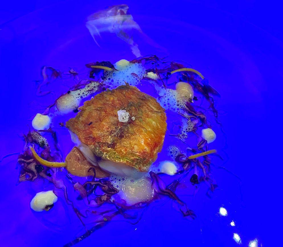 Wie ein abstraktes Gemälde: Rotbarbe à l`Orange im Restaurant «August».