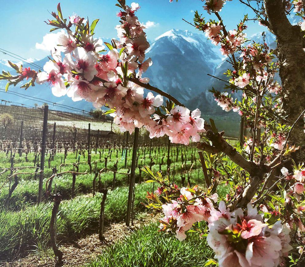 Das Wallis – Ein Weinland hinter den sieben Bergen?