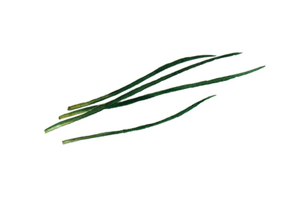 SCHNITTLAUCH schmeckt zwiebelig und würzig, die Blüten sind essbar. Er passt zu allem, was mit Zwiebeln harmoniert. Er enthält die Vitamine der B-Gruppe, Vitamin C und A sowie Kalium, Kalzium und Eisen und wirkt bakterienhemmend und schleimlösend.