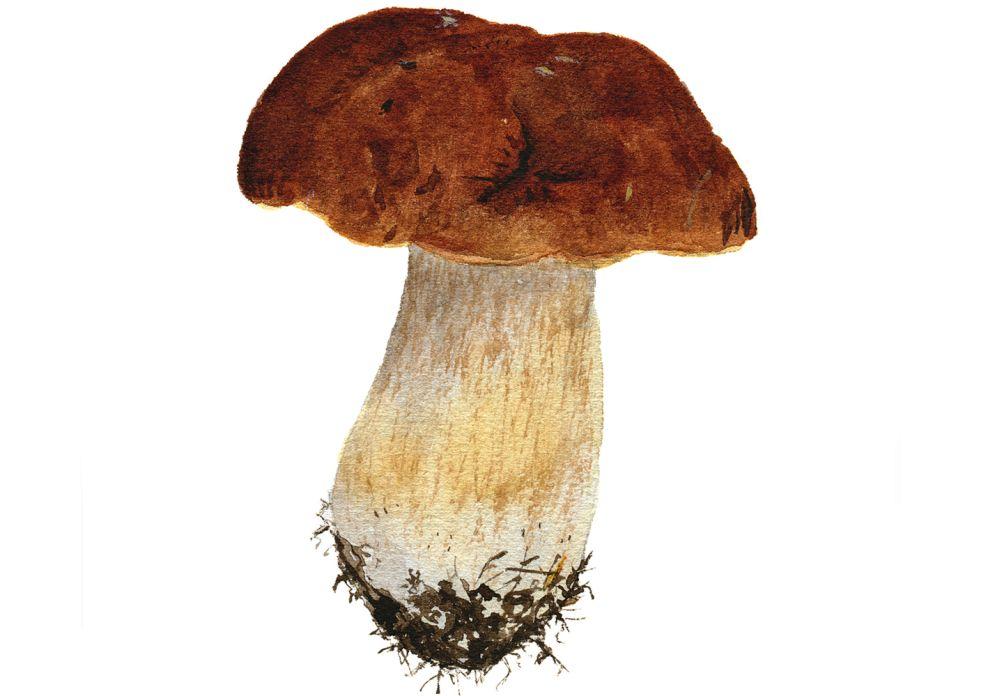 [STEINPILZ](https://www.wildeisen.ch/zutaten/steinpilze):  Der König unter den Pilzen. Erhältlich ist er von Mai bis Oktober, ausserhalb der Saison sind getrocknete Steinpilze, die ein sehr intensives Aroma haben, eine gute Alternative.