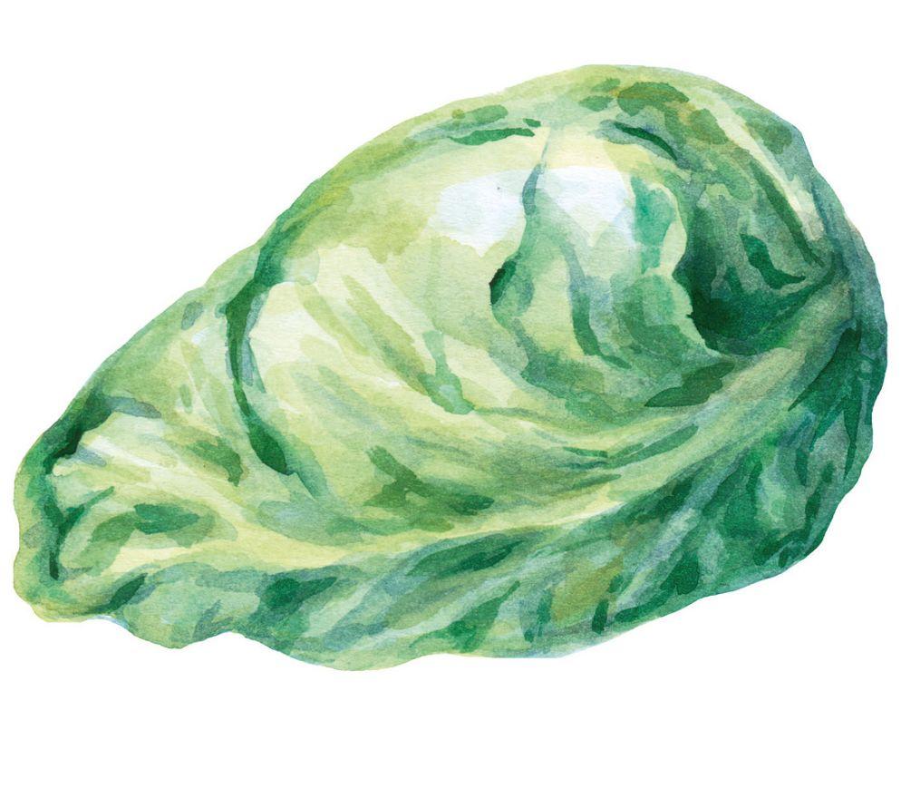 SPITZKOHL: Er ist die früheste aller Kabissorten und hat seinen Namen von der spitzen Kopfform mit besonders zarten Blättern. Deshalb schmeckt er auch roh als Salat und hat im Übrigen eine sehr kurze Garzeit.