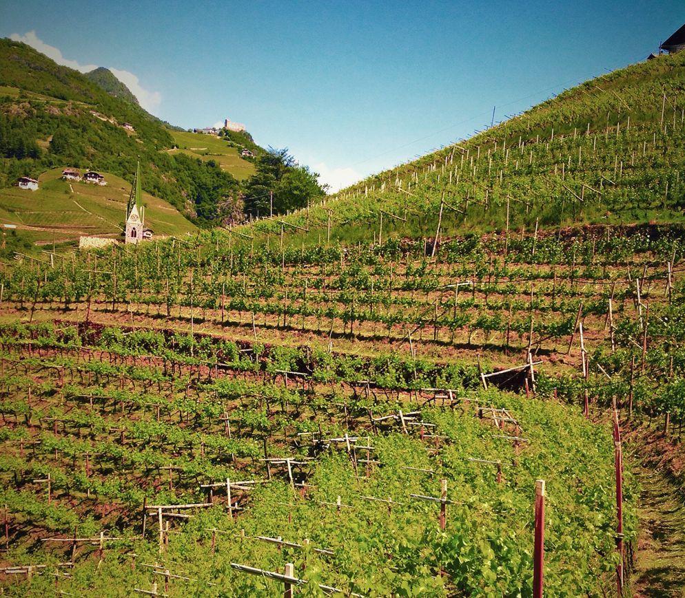 Typisch Südtirol: Vernatsch und Lagrein