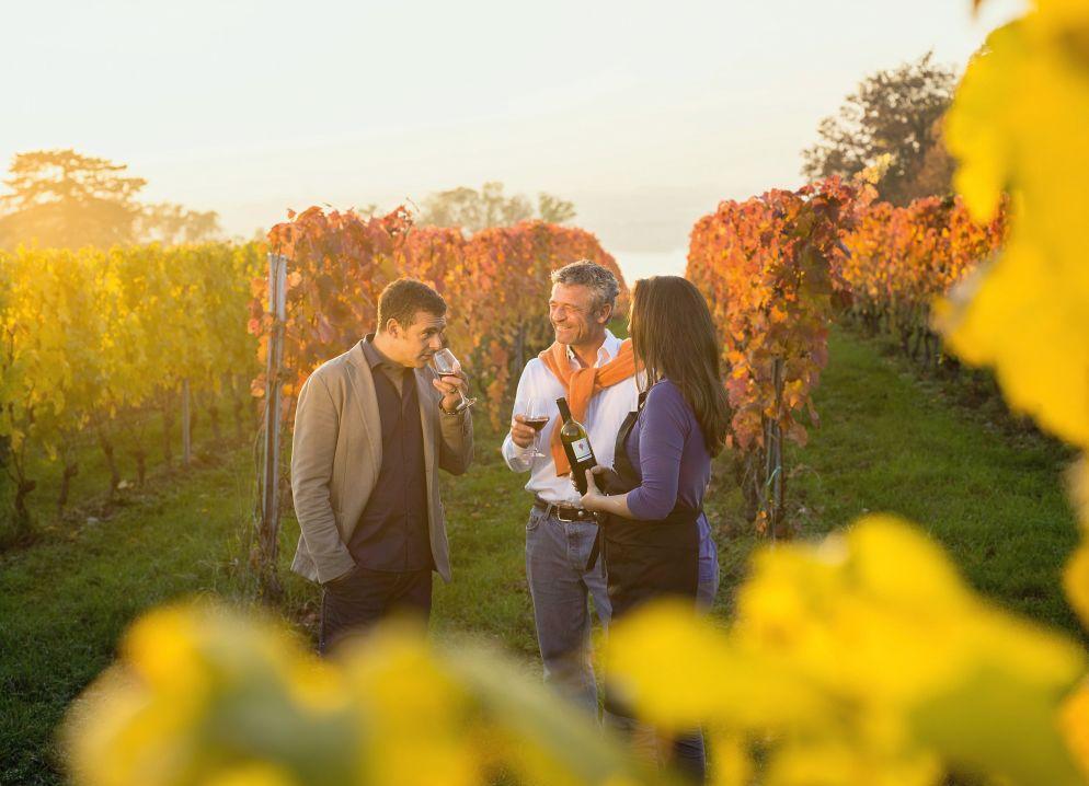 Eine Art heilige Dreifaltigkeit des kulinarischen Genf: Wein, Longeole und Cardon épineux.