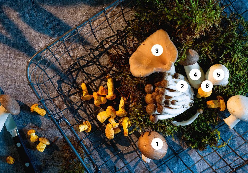 Pilze: Mit Stiel, Charme und Aroma