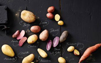Neues von der Kartoffel