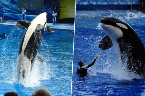 TripAdvisor bans SeaWorld ticket sales