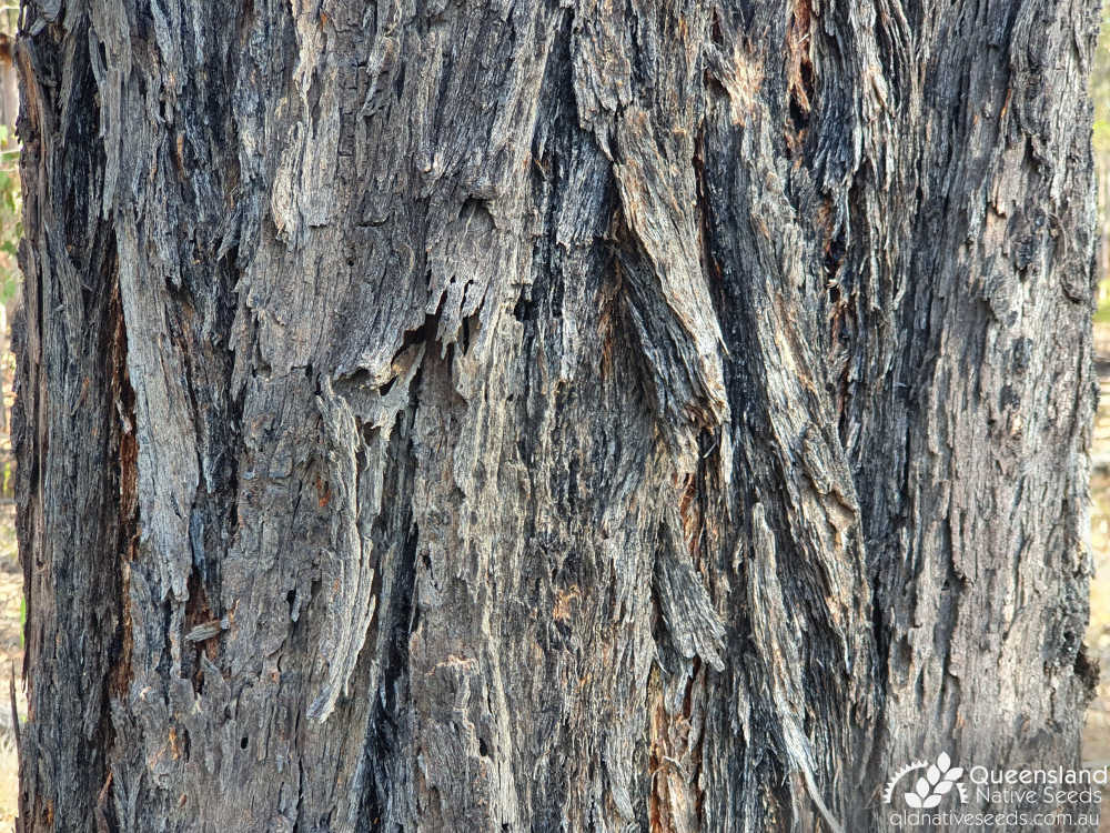 Eucalyptus fibrosa subsp. fibrosa | bark | Queensland Native Seeds