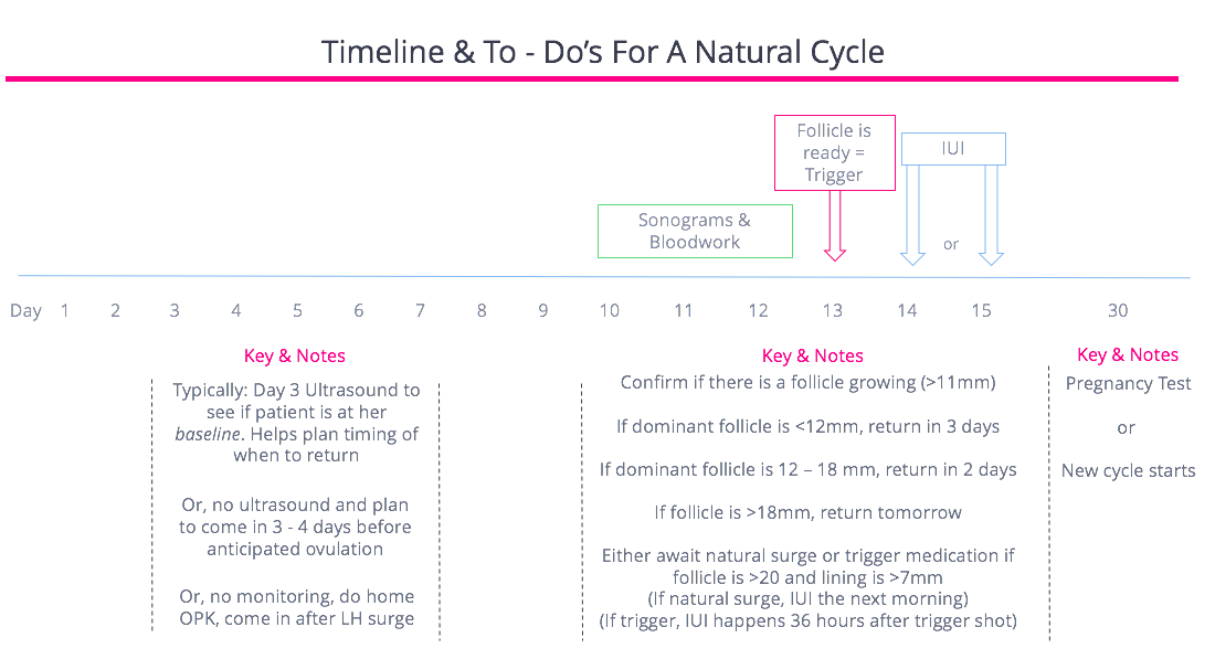 Natural Cycle Timeline