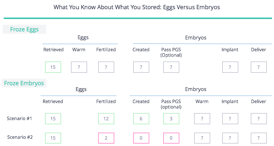 Eggs vs Embryos What You Know