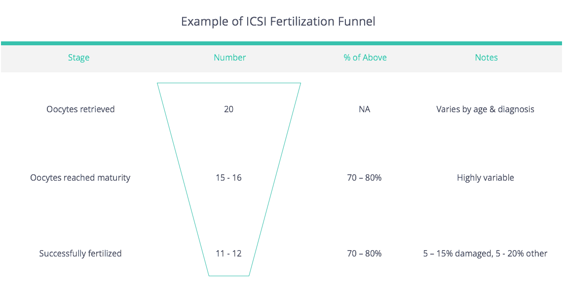 ICSI Fertilization Funnel