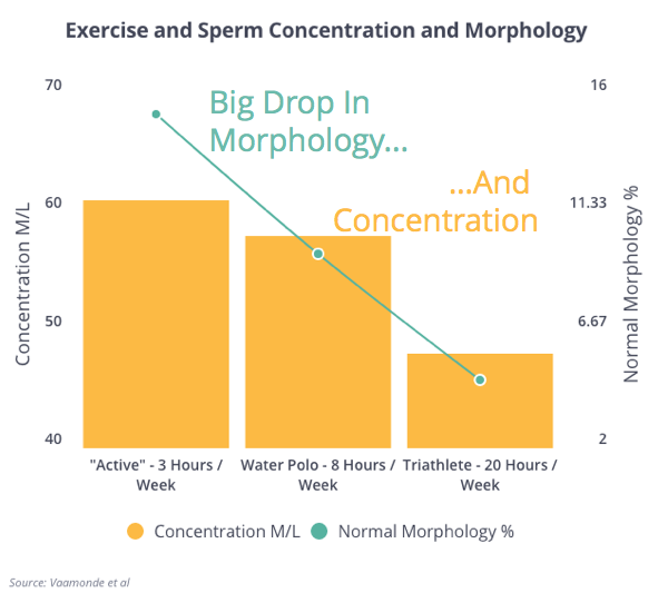 Exercise, Concentration and Morphology